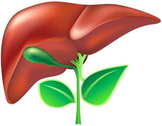 Вирусный гепатит и диагностика